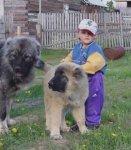 Взаимоотношения собаки и ребёнка