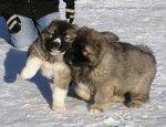 Игра со щенком