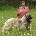 Кавказские овчарки: Белый Клык, Оррэш Аур Герон